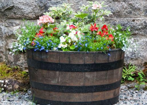 barrel-planters